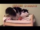 Приколы с котами- великий пост