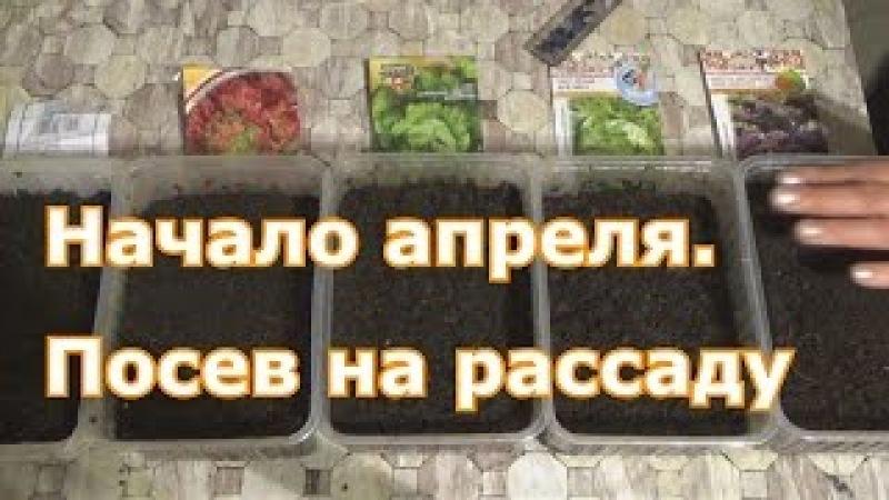 Сею в начале апреля на рассаду: физалис, базилик, капусту Кале, кочанные салаты и немного огурцов