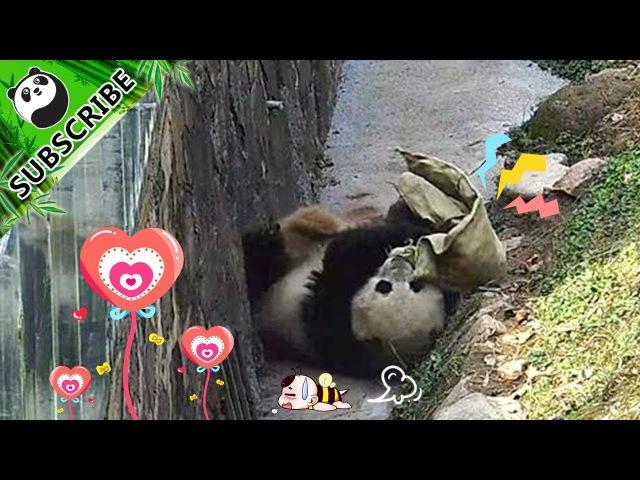 What New Toy Makes Baby Panda So Happy iPanda