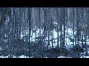 Охота на лося с лайкой западно сибирской в Удмуртии с копки