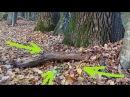 Необычные НАХОДКИ у корня 200 летнего ДЕРЕВА Удача или чудеса леса В Поисках Клада и Сокровищ