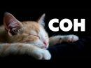 СОН Как улучшить качество сна