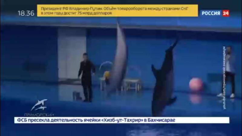 Новости на «Россия 24» • Сезон • Директор Приморского океанариума ушел в отставку после смерти дельфина