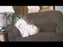Наэлектрилизованная собачка