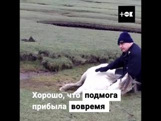 Спасение пони