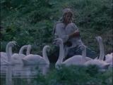 Дикие лебеди (1987)