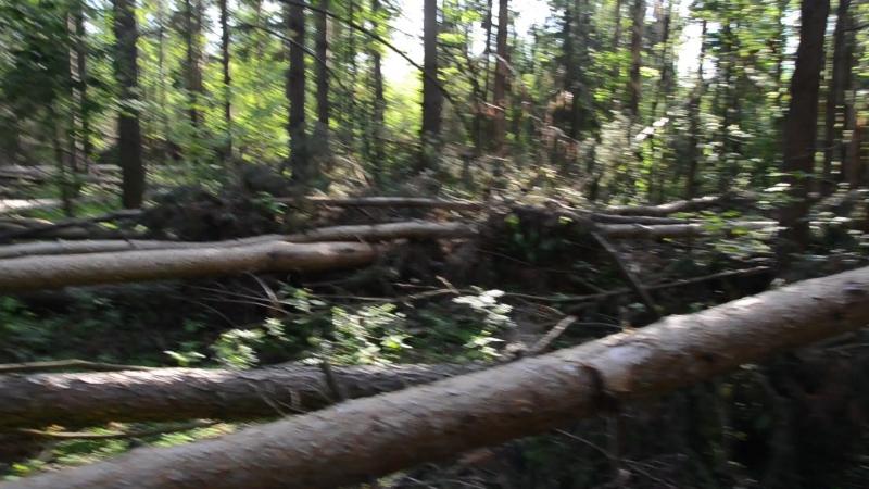 Буреломный лес Балашихи