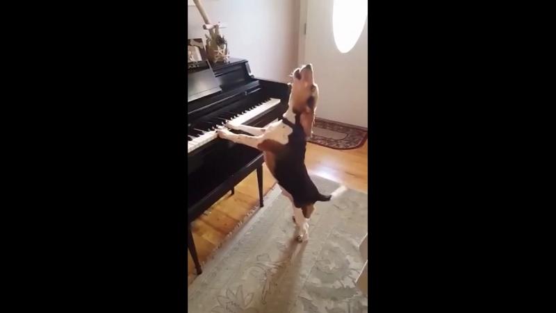 Бигльфортепиано =музыка