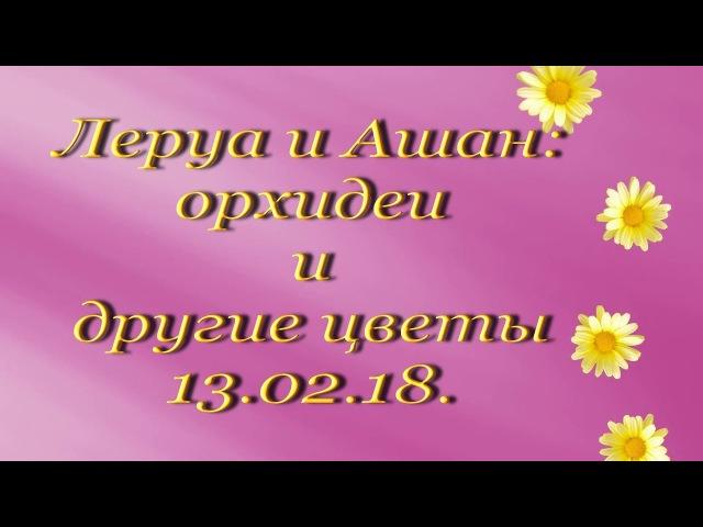 Леруа и Ашан:орхидеи и др.цветы (13.02.18.) Самара,ТЦ Космопорт.