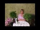 Хлорофитум выращивание и уход ЗдОрово в вашем доме