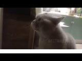 Кот говорит
