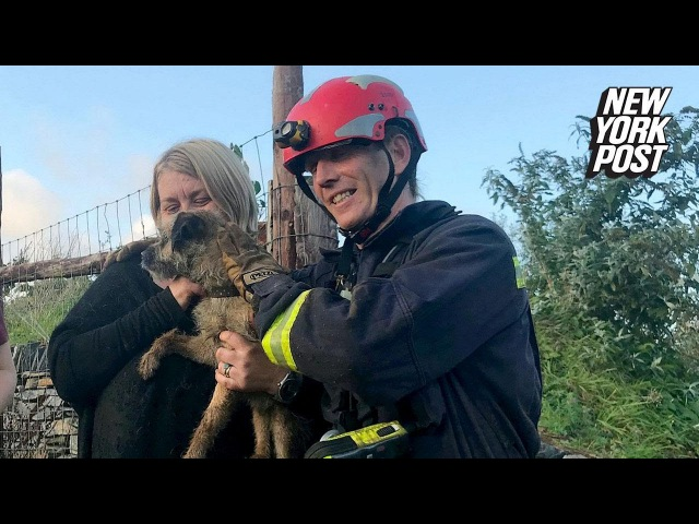 Lost dog's dramatic rescue was like something out of 'Mission Impossible' | New York Post