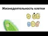 7. Жизнедеятельность клетки (5 класс) - введение в Биологию