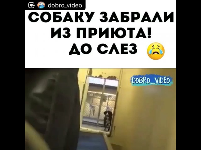 Instagram post by Кузя Домовой • Oct 10, 2017 at 342pm UTC