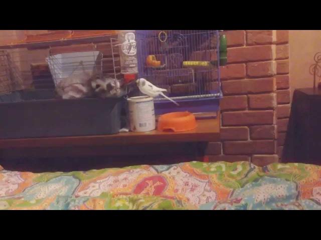 Кролик и попугай целуются