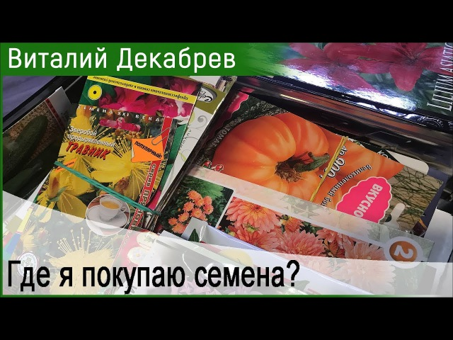 Где я покупаю семена Дача с Виталием Декабревым