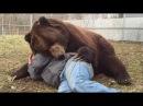 Медвежье уважение