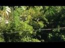 Tisiu: Saltando. Fio de Eletricidade. Bairro Santa Luzia. IMG_6775. 210,6 MB.09h03. 20jan18. 01