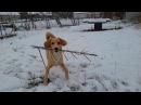 Щенок Таффи и палка Котики Коржик и Компот тоже в кадре 😜 Смешные собаки от кан ...