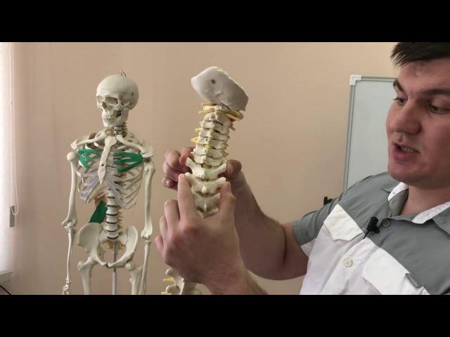 Мануальный терапевт свернул мне шею. Сместился позвонок