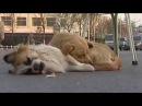 Собачья преданность До слёз Их верность поражает Топ 15