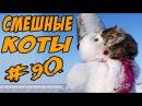 Приколы с котами Коты 2017 Смешные кошки ДО СЛЁЗ Funny Cats Compilation