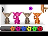 Funny Cat Videos For Kids - Colours &amp Rhymes for Kids - Animal Videos For Kids -  Kids Education