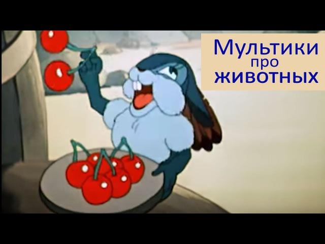 Сборник мультфильмов про животных 2