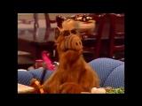 Alf Quote Season 1 Episode_13_Как я тебе рада