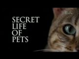 Тайная жизнь домашних питомцев 2 серия  Secret life of pets