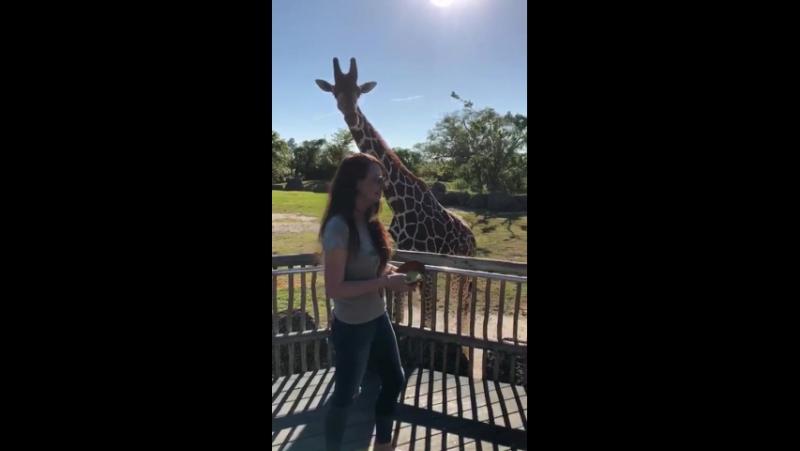 Как жирафа решил съесть мои волосы 🤣🤣🤣Miami zoo
