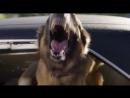 Тупой и ещё тупее 2 - Злая собачка , ну очень злая...