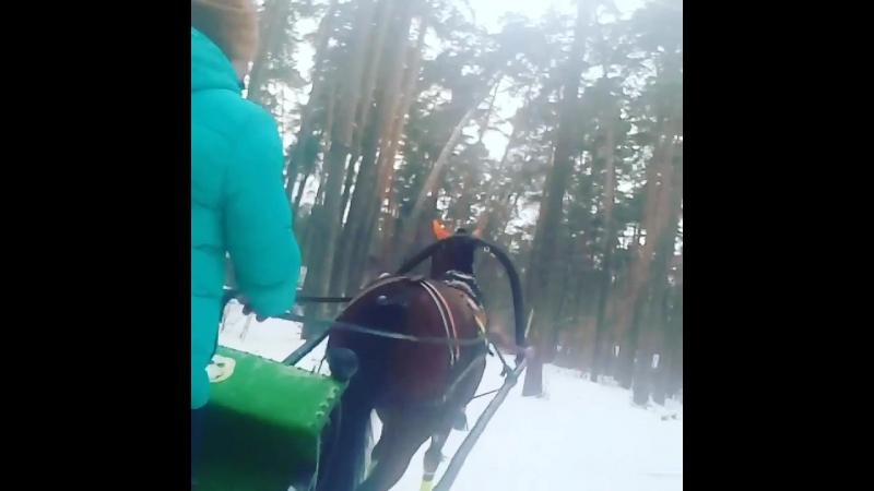 Прогулка по зимнему лесу на санях!