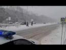 Полицейские переводят собачку