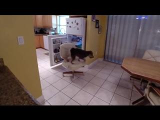 Эта собака голодной не останется