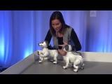 Нового умного робопса представили в Токио. Он умеет лаять, играть, реагировать на поглаживания, отличать хозяев и сам находить з