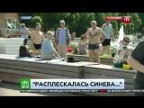 Расплескалась синева: пьяный десантник напал на корреспондента НТВ в прямом эфире