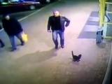 Милиционера из Полоцка, который пнул кота и попал на видео, уволили из органов внутренних дел