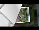 СВИРИСТЕЛЬ очень красивая перелетная птица - Смотри наше познавательное видео