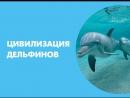 Цивилизация дельфинов