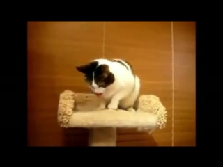 Коты блюют под техно