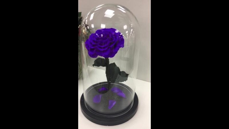 Роза в Колбе Роза под Куполом Вечная Роза под Колпаком Крым Ялта Сказка