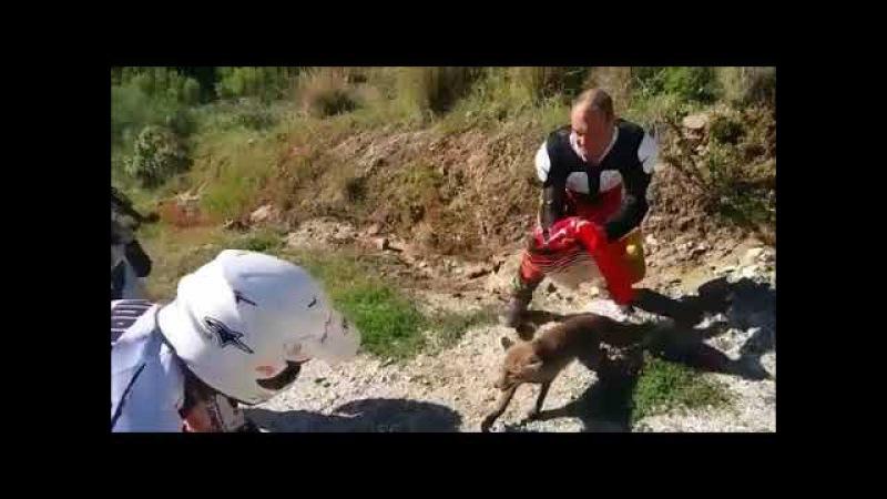 Motoristas sueltan a un zorro que cayó en una trampa