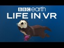 BBC Earth Life in VR California Coast Launch Trailer  Google Daydream