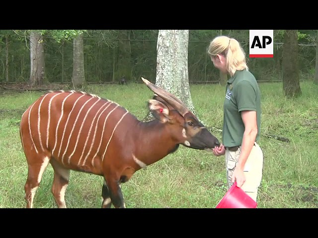 African Antelope Get New Home in New Orleans