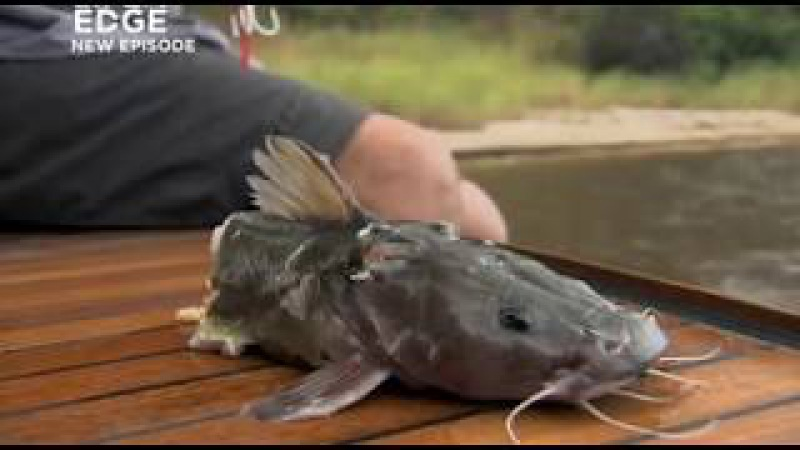 Речные монстры второй сезон 1 серия: Рыба-демон. River Monsters s2e1 Demon Fish