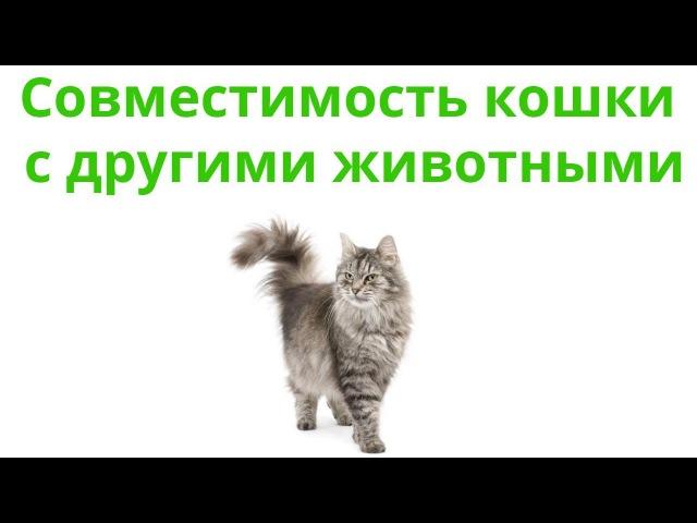 Совместимость кошки с другими животными. Ветеринарная клиника Био-Вет