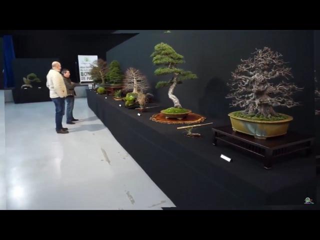 Bonsai Show, Bonsai charity Exhibition 2017 Parla Madrid Spanish