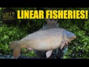 CARP FISHING at Linear Fisheries 2017