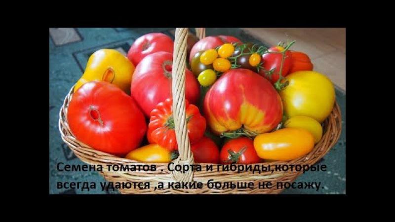 Семена томатов.Сорта и гибриды,которые всегда удаются и те которые больше не пос...